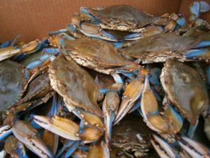 Seafood0